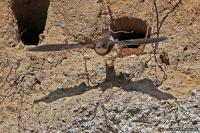 Riparia riparia; Sand martin; Backsvala