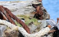 Sterna vittata; Antarctic tern; Antarktistärna